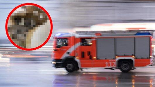 Eine Schock-Entdeckung in einem Keller in NRW löste einen Notruf bei der Feuerwehr aus.