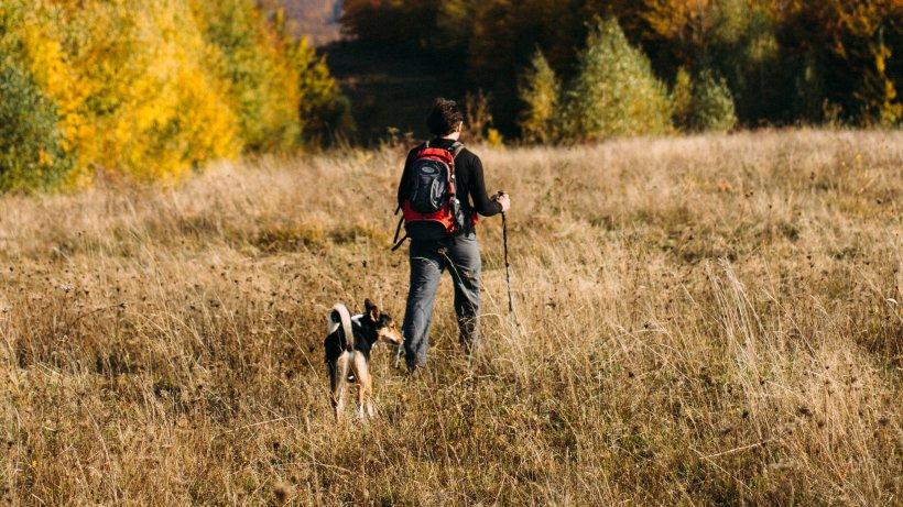 Hund im Sauerland: Mann geht mit Vierbeiner spazieren – plötzlich wird das Tier in den Tod gejagt