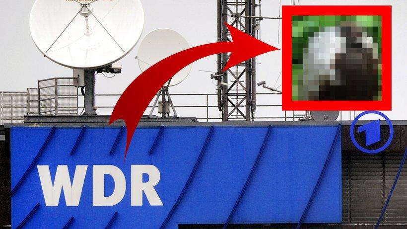WDR zeigt dieses mysteriöse Tier aus NRW – selbst Experten sind völlig ratlos