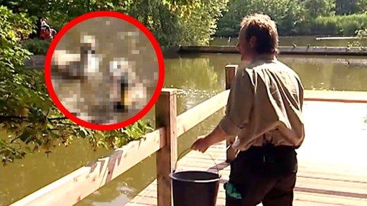Zoo Münster: Als Tierpfleger Ralf die Vögel füttern wollte, kam es zu Szenen, die ihn verdutzten.