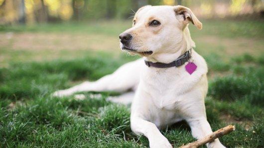 Hund in Dortmund: Absolut herzlos, was eine Familie mit ihrem Vierbeiner machte. (Symbolbild)