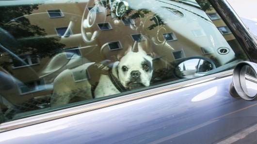 Schrecklich, was ein Hund in Dülmen bei dieser Sommerhitze aushalten musste. (Symbolfoto)