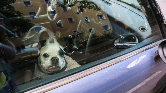 Ein Hund in NRW wurde bei der Hitze allein im Auto zurückgelassen. (Symbolbild)