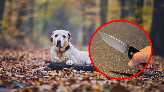 Schreckliche Tat im Ruhrgebiet! Ein Hund in Witten wurde Opfer einer schockierenden Attacke. (Symbolbild)