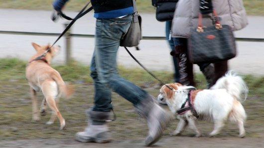 Hund in NRW: Ein Streit zwischen zwei Hundehaltern eskaliert komplett. Anschließend sucht die Polizei nach einem der Männer. (Symbolbild)