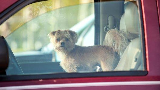 Ein Hundebesitzer aus NRW musste Schreckliches erleben. (Symbolbild)