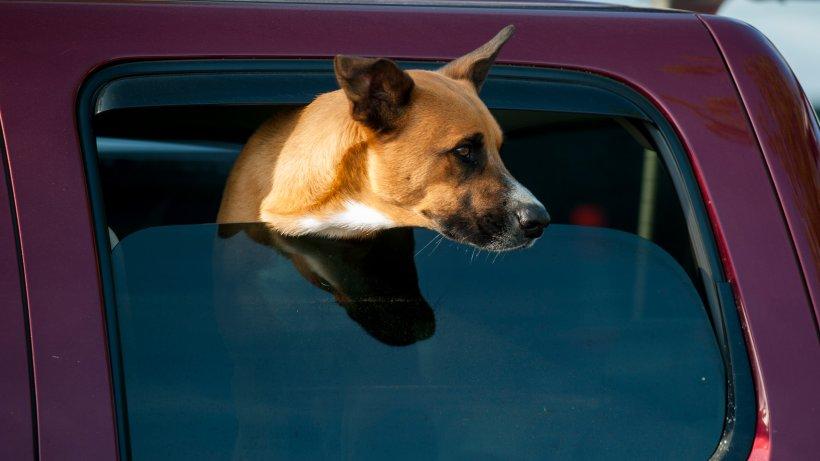 NRW: Hunde-Besitzer will nur eben in die Apotheke – zurück am Auto folgt der Schock