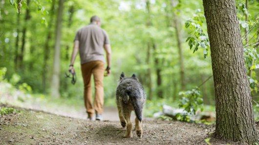 Hund in NRW: Unfassbar. Völlig ohne Grund fügte ein Mann dem armen Vierbeiner eine schreckliche Verletzung zu. (Symbolbild)