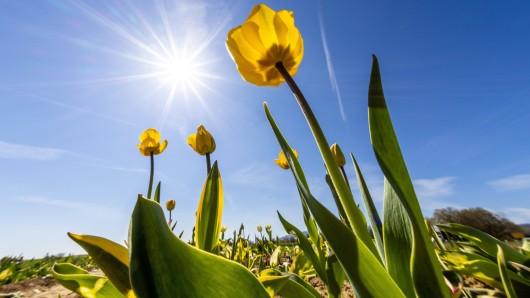 Das Wetter in NRW wird in den nächsten Tagen viel Sonne bereithalten. Doch nachts gibt es ein Problem. (Symbolfoto)