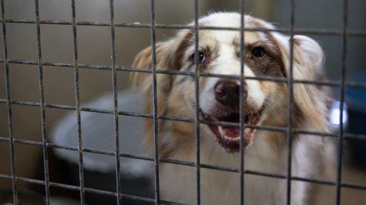 Hund in NRW: Dieser Vierbeiner hat ein schweres Schicksal. (Symbolbild)