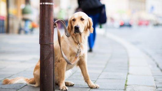 Hund in NRW: Der Vierbeiner Balu hatte ein wirklich trauriges Leben - das soll sich jetzt aber ändern. (Symbolbild)