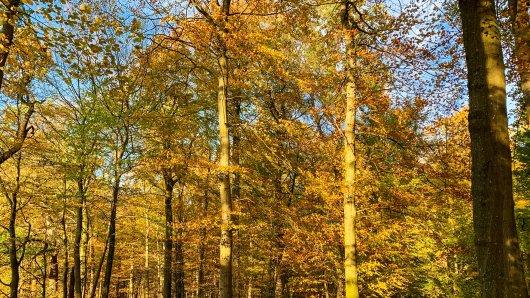 Wetter in NRW: Gibt es doch noch einen goldenen Oktober? (Symbolbild)