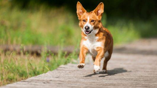Mysteriöser Hunde-Mix gibt Tierheim Rätsel auf. (Symbolbild)