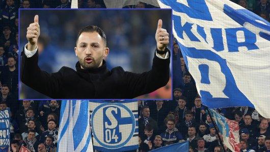 Nach dem Spiel zwischen Schalke und Manchester City wusste Domenico Tedesco genau, bei wem er sich zu bedanken hatte.