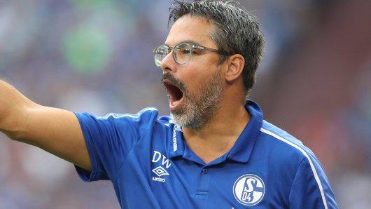 David Wagner und der FC Schalke 04 sind am Sonntagabend bei 1899 Hoffenheim zu Gast.