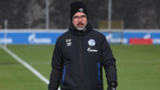 FC Schalke 04: Trainer David Wagner darf sich über einen Rückkehrer freuen.
