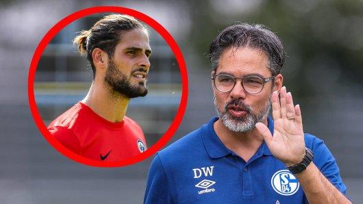 David Wagner kann beim FC Schalke 04 ab sofort auf Goncalo Paciencia zurückgreifen.