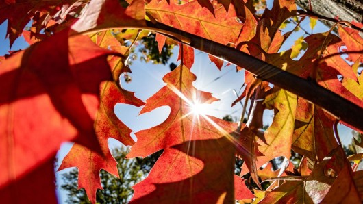 Der Herbst fühlt sich dieses Wochenende wie ein verlängerter Sommer im Ruhrgebiet an.