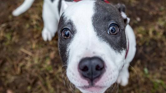 Ein Hund wurde von einem Mann gerettet.
