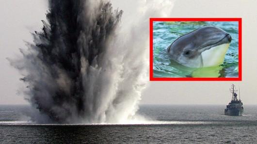 Bei einem Manöver mit Bundeswehr-Beteiligung starben 18 vom Aussterben bedrohte Schweinswale.