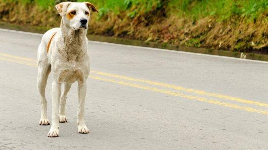 In NRW ist ein Hund auf einer Landstraße von einem Raser erfasst worden. Der Besitzer des Hundes ist geschockt: Denn der Fahrer fuhr einfach weiter! (Symbolbild)