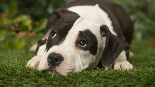 Ein kleiner Hund kam mit einer Fehlbildung zur Welt. Die Besitzer wollten ihn töten. (Symbolbild)