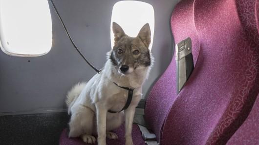 Ein Hund soll Entschädigung für einen gecancelten Flug bekommen. (Symbolfoto)