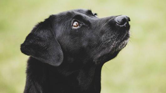 Vor einem Supermarkt in Hamburg wurde ein Hund gestohlen: Die Besitzerin sucht verzweifelt nach Inge