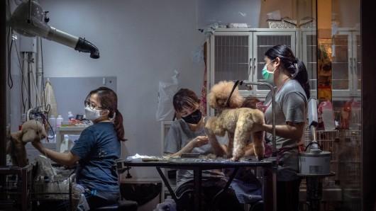 Ein schlimmes Gerücht hat in China die Runde gemacht: Haustiere sollen getötet werden! Was ist dran? (Symbolfoto)