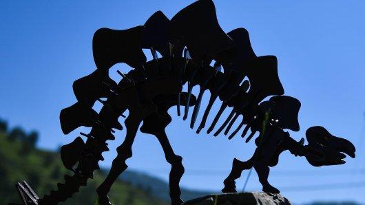Forscher finden Dinosaurier-Skelett und es stellt DIESE Theorie infrage. (Symbolbild)