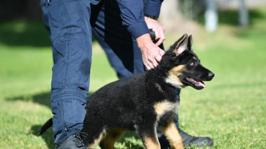 Ein Mann hatte einem Bekannten seinen Hund in Pflege gegeben. Wie der mit der Verantwortung umgeht, macht fassungslos. (Symbolbild)