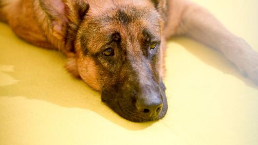 Ein Hund wurde von seinem Besitzer einfach ausgesetzt. (Symbolbild)