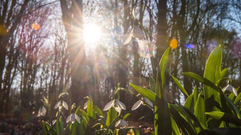 Wetter: Frühlings-Hoch vor dem Aus? Diese Prognose macht wenig Lust - Der Westen