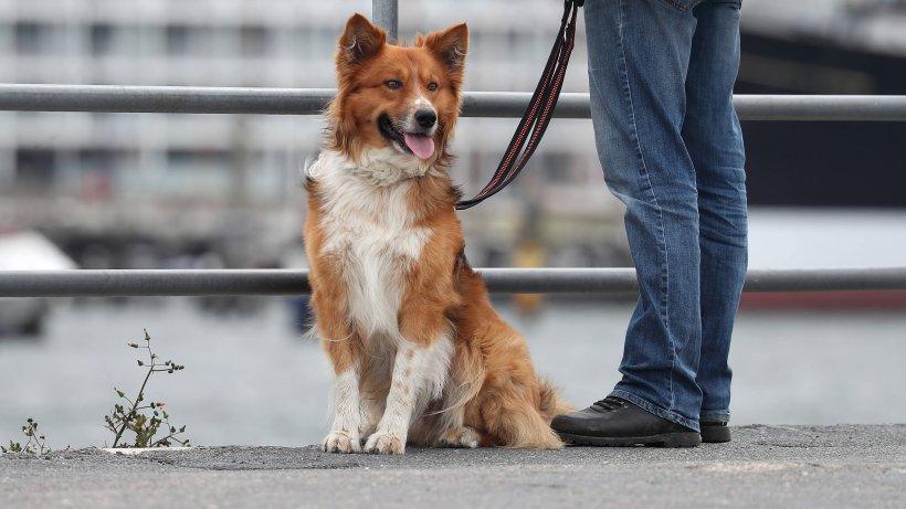 Hund: Weil Vierbeiner draußen miteinander spielen, müssen die Besitzer nun blechen