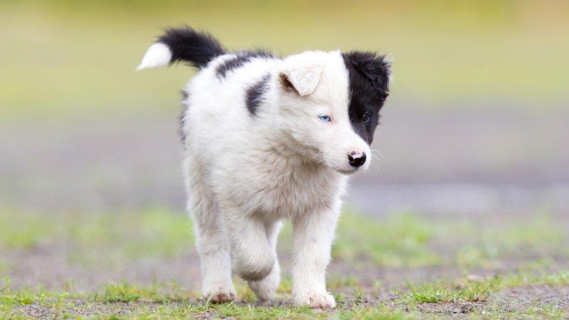 Hund: So einen Welpen hast du garantiert noch nie gesehen!