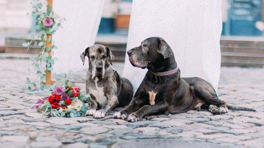 Eine Frau freut sich über Hunde auf ihrer Hochzeit. Kinder sind dagegen nicht so ihres.