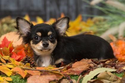 Hund Verschwindet Spurlos Verbluffend Wo Er 6 Jahre Spater