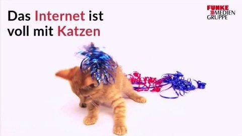 Deutsche Kätzchen Werden Gefüttert