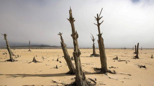 Abgestorbene Bäume an dem in weiten teilen trockenen Speichersee Theewaterskloof bei Kapstadt in Südafrika. Nun hat sich die Lage gebessert.