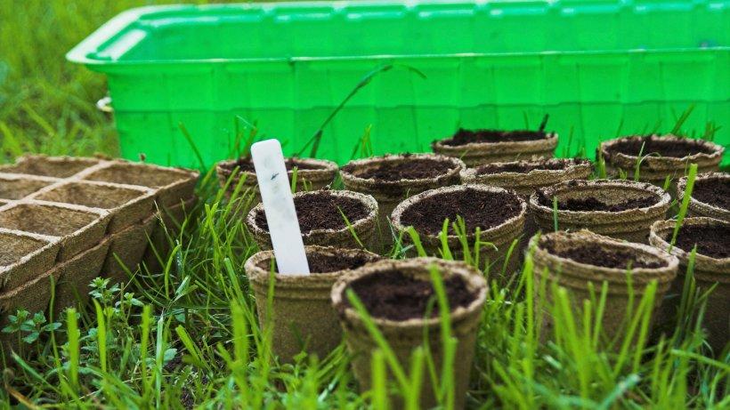 welche n hrstoffe pflanzen beim wachsen helfen und welche ihnen schaden wohnen. Black Bedroom Furniture Sets. Home Design Ideas