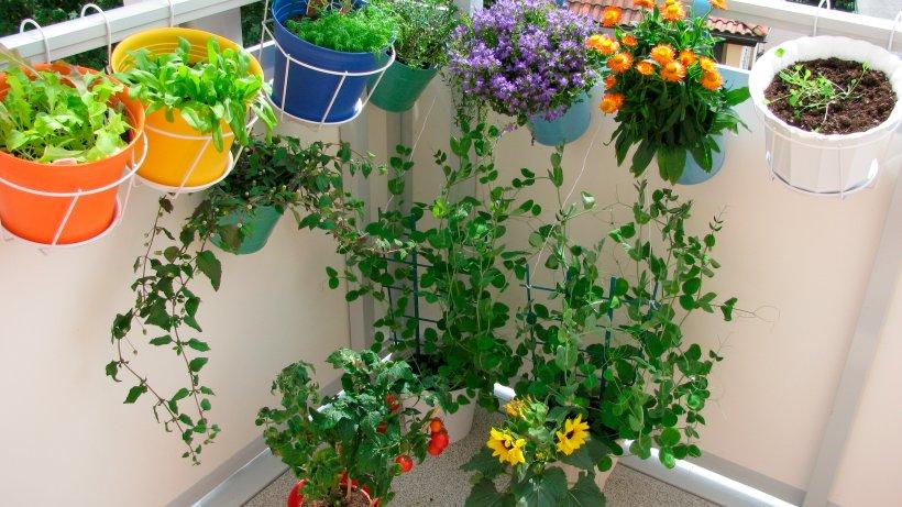 beet und balkonpflanzen gleich nach dem pflanzen d ngen wohnen. Black Bedroom Furniture Sets. Home Design Ideas