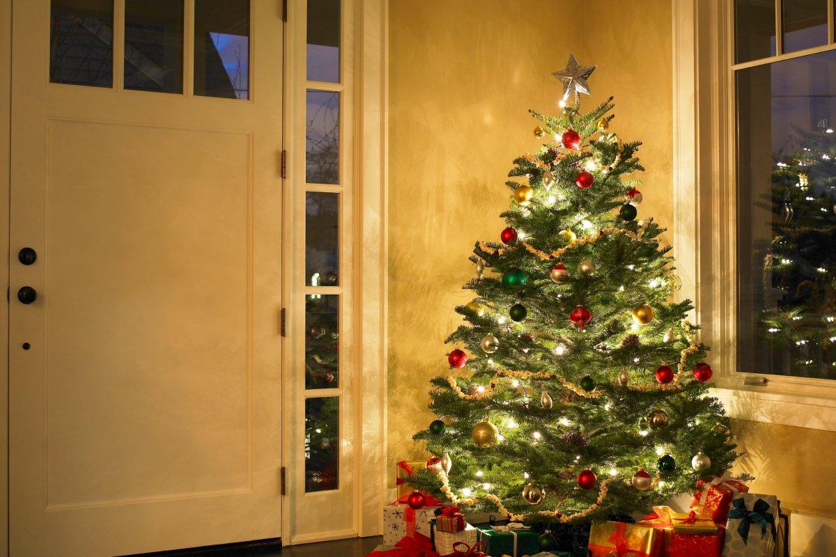 Dortmund Weihnachtsbaum Kaufen.So Finden Verbraucher Den Passenden Weihnachtsbaum Wohnen
