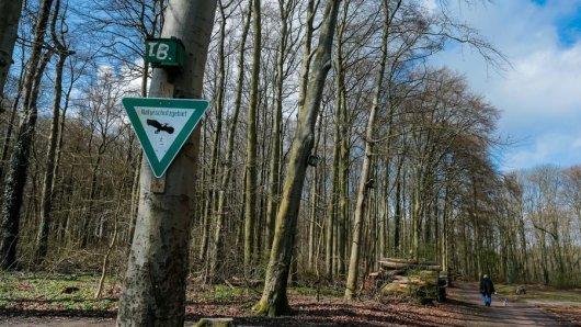 Der Dorney-Wald in Oespel. Auch hier werden Bäume gefällt.